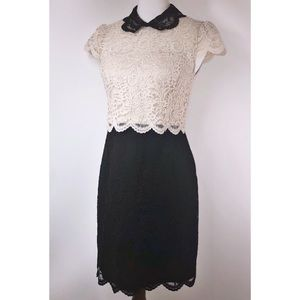 Betsey Johnson Cream and Black Lace Dress